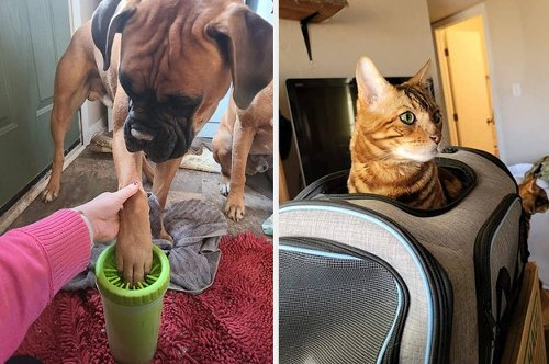29 Things That'll Solve Such Age-Old Pet Owner Problems, Even Your Pet Will Be Impressed