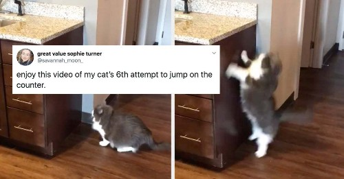 15 Lawful Good Cats Who Prove Not All Cats Are Chaotic Evil