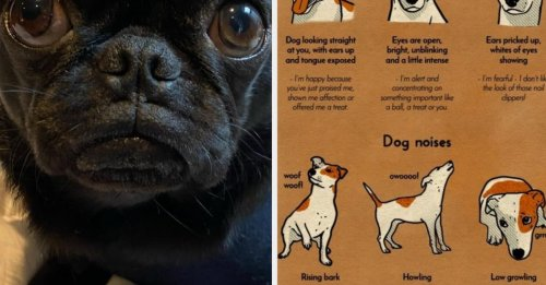 26 Helpful Charts All Dog Owners Should Have Bookmarked