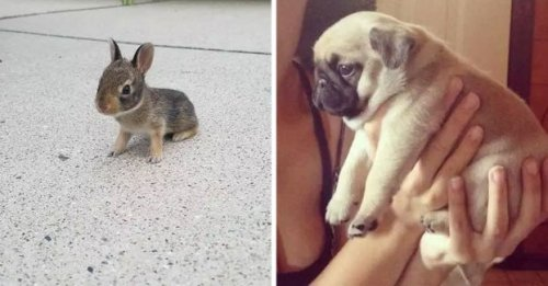 17 Animals Who Are So Smol, You Won't Be Able To Think About Anything Else