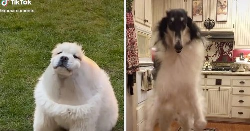"31 Videos That Will Leave You Thinking, ""Omg, I Just Love Dogs Soooo Much"""