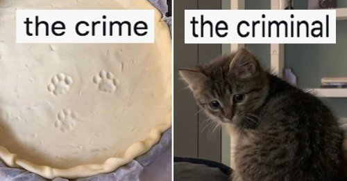 17 Animal Tweets From This Week That I Just Really Think We Should All Take A Sec To Look At