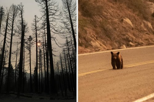 Wildfires Around Lake Tahoe Could Have A Long-Lasting Effect On One Of California's Most Beautiful Places