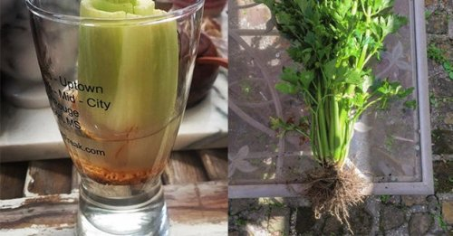 26 Really Clever Gardening Tricks