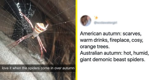 28 Tweets That Sum Up Exactly What Autumn (AKA Fall) Is Like In Australia