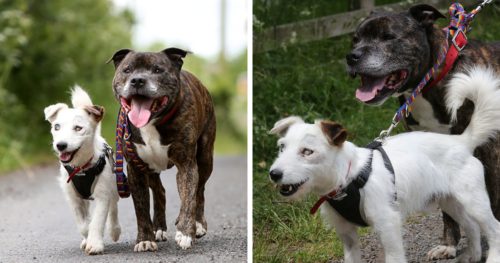 This Blind Dog Has His Own Seeing-Eye Dog