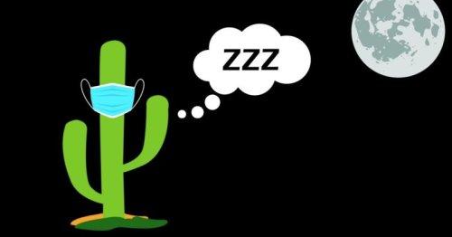 Cactus Hugs is taking a little break