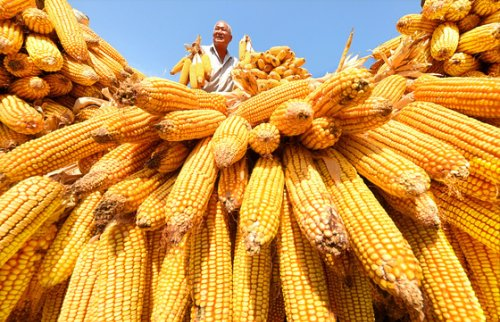 China Extends Historic Corn-Buying Spree With U.S. Purchase