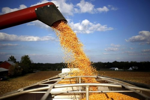 China Is Already Scooping Up U.S. Corn From the Next Harvest
