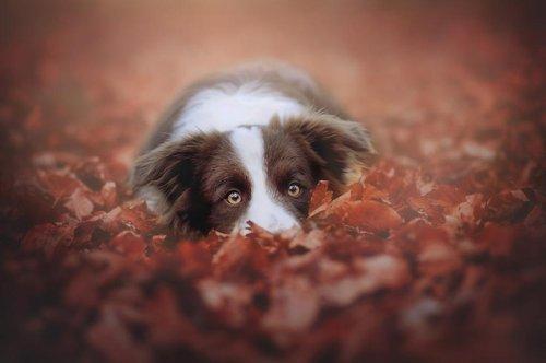 Cani bellissimi immortalati da Anne Geier