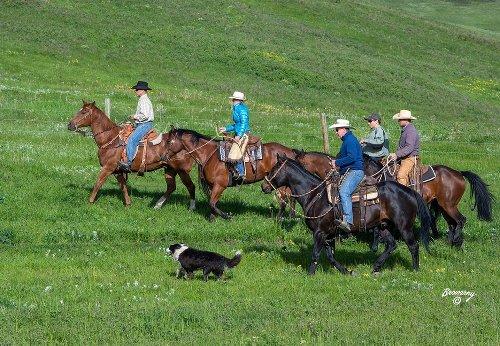 TESA 25: Soderglen South receives environmental award from Alberta Beef Producers