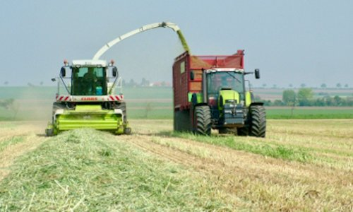 Hybrid fall rye offers high yield, flexibility to beef producers