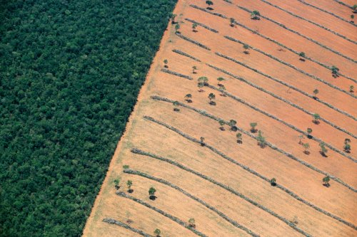 Land-use change has affected 'almost a third' of world's terrain since 1960 | Carbon Brief
