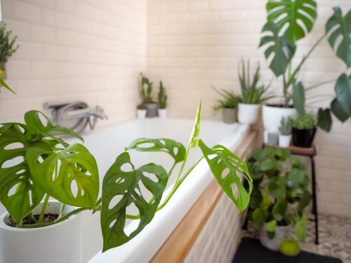 Le piante esotiche per il bagno
