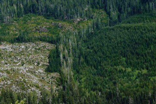 Prominent Canadians and international celebrities lend star power to old-growth cause - BC News