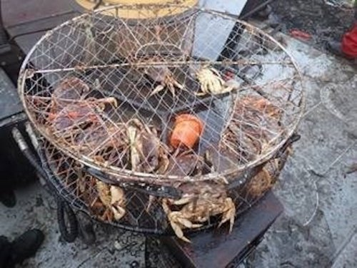 Government seeks to seize home of man guilty of illegal crab fishing off North Vancouver (BC)
