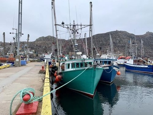 Scientists worry cod will never come back in Newfoundland - Canada News