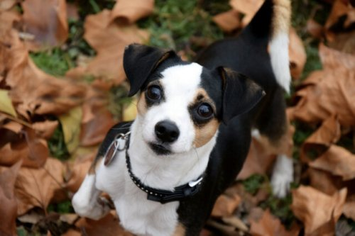 BC SPCA offering half-priced adoption - BC News
