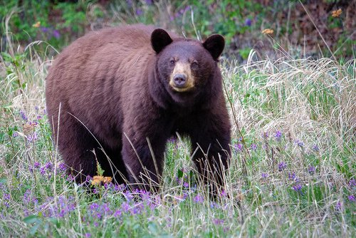 Rose Valley residents warned of habituated bear in area