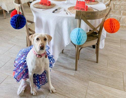 Dog Mom Update: Lola Turns 2!