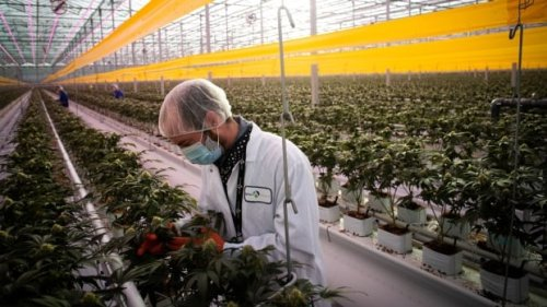 Aphria shareholders give green light to merger with Tilray | CBC News
