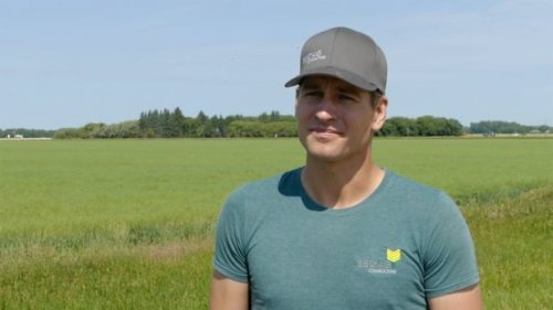 Crop-destroying grasshoppers chewing away at Manitoba farmers' livelihoods | CBC News