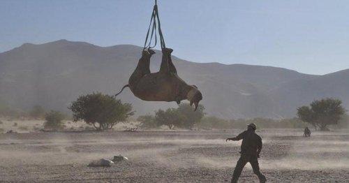 Researchers who dangled a dozen endangered rhinos upside down earn Ig Nobel
