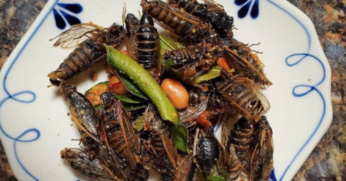 Why foodies are getting ready to feast on cicadas