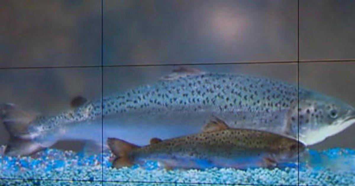 Warming rivers in U.S. West killing fish and imperiling industry