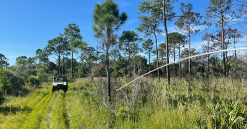 Search for Gabby Petito's fiancé Brian Laundrie resumes in Florida's Carlton Reserve