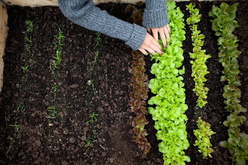 5 Tips for Beginning Gardeners Who Want to Grow Their Own