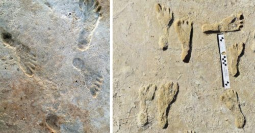 Humans in North America may have existed much earlier than scientists once thought, ancient fossil research shows