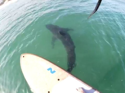 Teen Captures Close Encounter With Great White Shark In Santa Barbara County