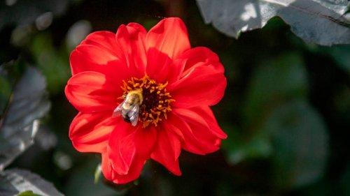'I'm always learning.' Longtime Penn State Master Gardener shares tips, experiences with program