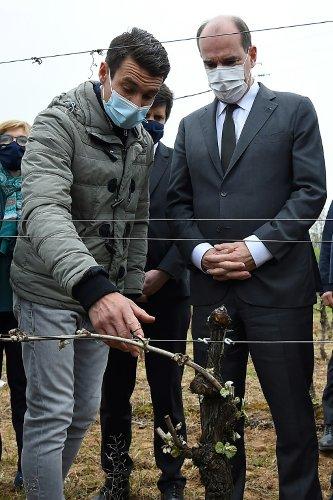 Vignes et vergers ravagés par le gel: Castex annonce un milliard d'euros d'aides aux producteurs