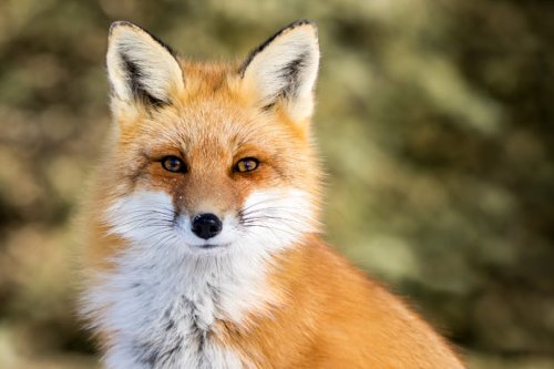 Breaking news: Saks Fifth Avenue will ditch fur | Charles A. Kush III