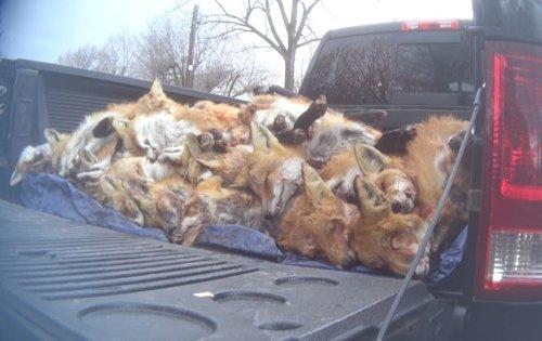 Breaking news: Maryland lawmakers ban wildlife killing contests | Charles A. Kush III
