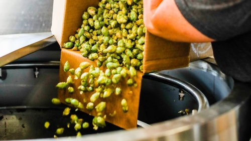 Every fall, local brewers jump through all kinds of hoops to get wet-hop beers on tap