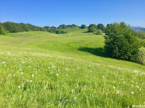 Escursione sull'Appennino Ligure, Pian della Cavalla e Monte Lésima
