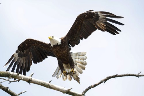 Eyeing eagles: Winter is a perfect time to get outside, beat cabin fever and go birding