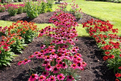 Easy ways to calculate how many plants to buy for your garden
