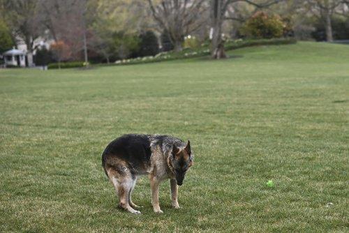 Bidens' older German shepherd, Champ, has died at 13