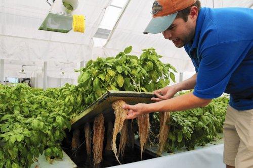 Next wave of ecopreneurs hopes to find key to making aquaponics profitable