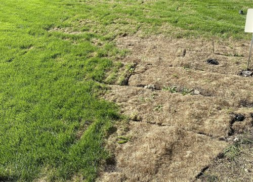 New sod turning brown? Check watering habits during hot, dry end of summer