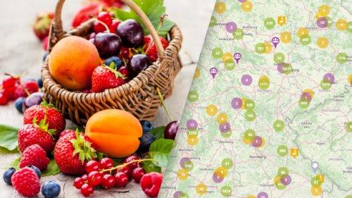 Hier ist Mundraub erlaubt: Interaktive Karte zeigt, wo wilde Obstbäume wachsen