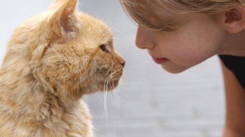 Katzenbesitzer sollten ihn kennen: Mit einem einfachen Trick zeigen Sie Ihrer Katze, dass Sie sie lieben