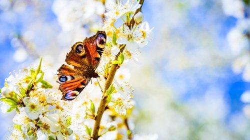 Insektenfreundlicher Garten: So schaffen Sie ein gesundes Ökosystem