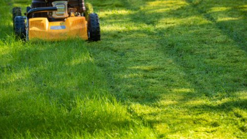Nicht in die Tonne: Wann Sie den Rasen nach dem Mähen einfach liegen lassen können