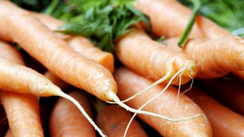 Karotten, Salat, Zwiebeln: Wie Sie aus Gemüseresten neue Pflanzen ziehen können