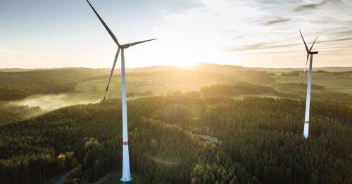 Ausbau von Windparks: Bebauung in Wäldern und Artenschutzlockerung gefordert